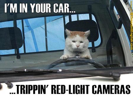 funny cat pictures with captions. 1: Funny Cat Macros and