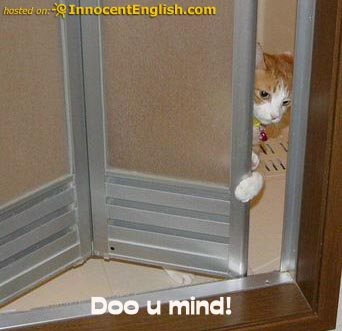 Lolcats 10 Funniest Captioned Cat Pictures