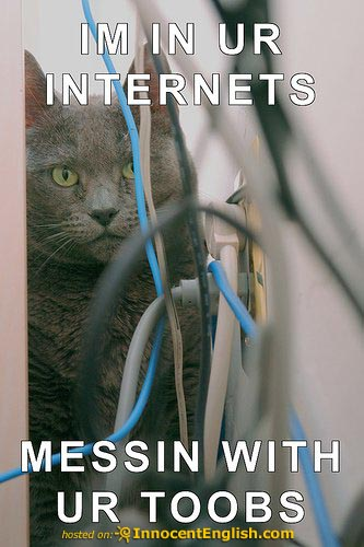 funny-cat-playing-internet.jpg