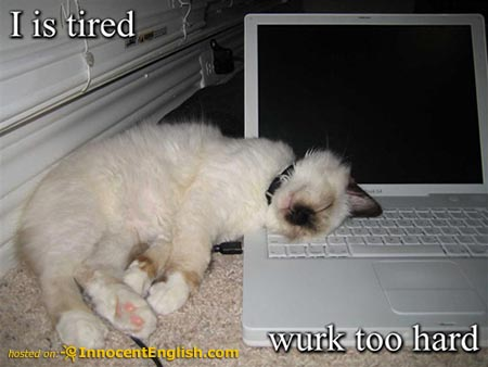 funny work pictures. Really Funny Kitten lolcat