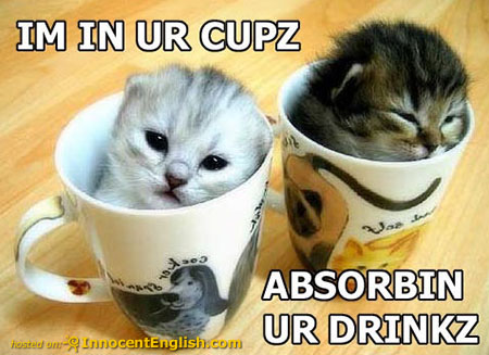 kittens-inside-coffee-mugs.jpg