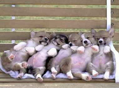 really cute puppies on a bench