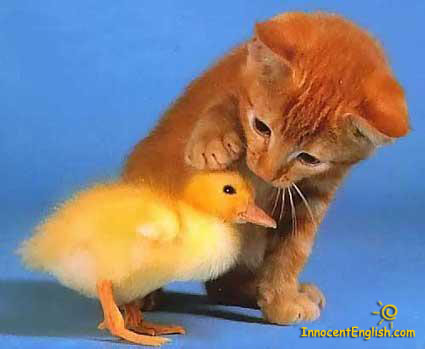 cute kitten with baby chick