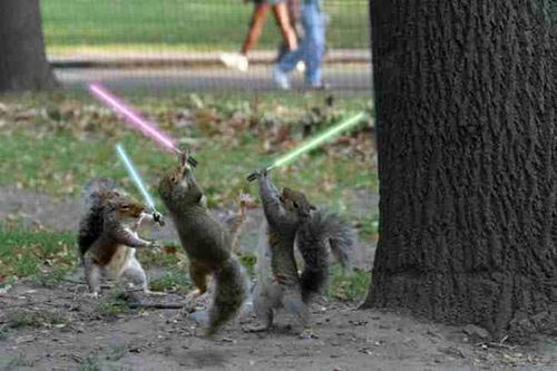 jedi squirrels