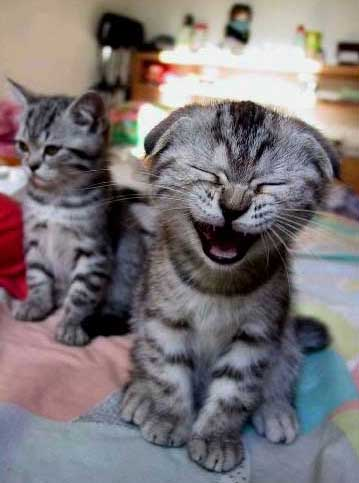 laughing kitty