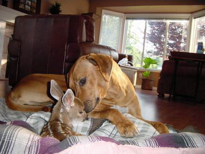 dog with baby deer fawn