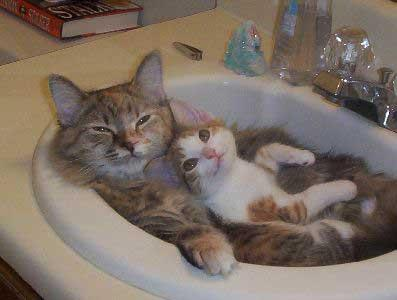 Cute Cat and kitten in a sink