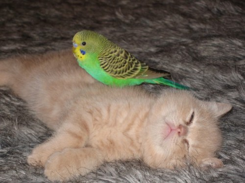 very cute bird and kitten friends playing