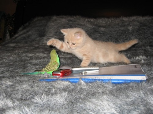 cute kitty and bird playing